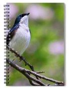 Swallow Song Spiral Notebook