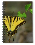 Swallow Tail Butterfly Spiral Notebook