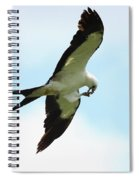 Swallow-tailed Kite Eating Spiral Notebook