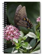 Swallowtail Buterfly Spiral Notebook