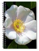 Swamp Mallow  Spiral Notebook