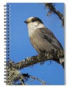 Swampy Perch Spiral Notebook