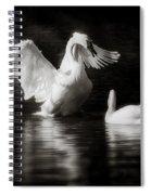 Swan Display Spiral Notebook