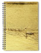 Swan Family Into The Sunset Spiral Notebook