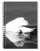 Swan In Motion On A Pond Spiral Notebook