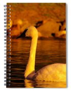 Swan Near Sundown Spiral Notebook