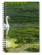 Swan On The River Lathkill Spiral Notebook