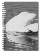Swan Reflection Spiral Notebook