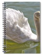 Swan Swimming By Spiral Notebook
