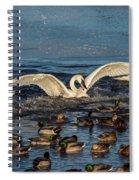 Swan Wings Reach Spiral Notebook