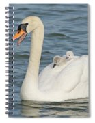 Mute Swan With Babies On Its Back Spiral Notebook