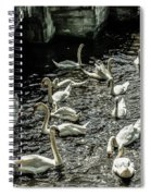 Swans On The Canal Spiral Notebook
