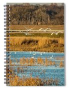 Swans Returning To The Roost At Riverlands 7r2_dsc3855_12202017 Spiral Notebook