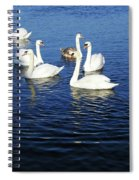 Swans Sligo Ireland Spiral Notebook