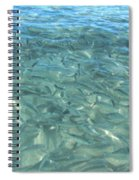 Swarming Fish Spiral Notebook
