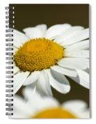Sweat Bee Spiral Notebook