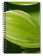 Sweeping Green Spiral Notebook