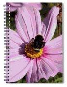 Sweet Bee On Pink Cosmos - Digital Art Spiral Notebook