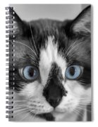 Sweet Blue Eyes Spiral Notebook