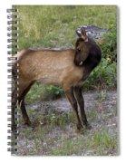 Sweet Elk Calf Spiral Notebook