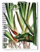 Sweet Flag Or Calamus, Acorus Calamus Spiral Notebook