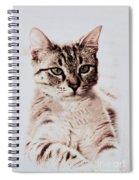 Sweet Jaspurr Spiral Notebook