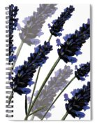 Sweet Lavender Spiral Notebook