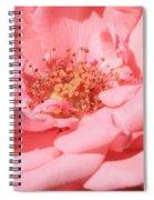 Sweet Pink Rose  Spiral Notebook