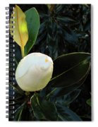 Sweet Promise Spiral Notebook