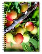 Sweet Ripe  Plum On A Branch Spiral Notebook