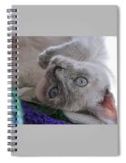 Sweet Sabrina Spiral Notebook