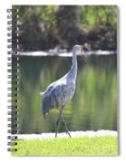 Sweet Sandhill By The Pond Spiral Notebook