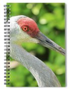 Sweet Sandhill Profile Spiral Notebook