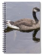 Swimming Canada Goose Spiral Notebook