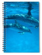 Swimming Dolphins Spiral Notebook