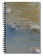 Swimming Turtles Spiral Notebook