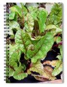 Swiss Chard In A Vegetable Garden 1 Spiral Notebook