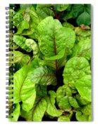 Swiss Chard In A Vegetable Garden 4 Spiral Notebook