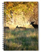 Sycamore Grove Series 10 Spiral Notebook