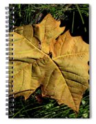 Sycamore Leaf Spiral Notebook