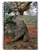 Sycamore Tree And Fall Leaves Spiral Notebook