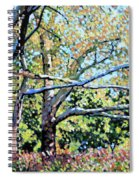Sycamore Trees At The Zoo Spiral Notebook