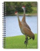 Sychronized Sandhills Spiral Notebook