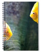 Symphysodon Discus Fishes Spiral Notebook