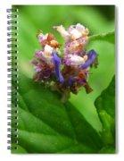 Synchlora Aerata Caterpillar Spiral Notebook