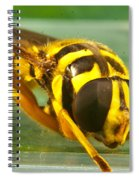 Syrphid Eye To Eye Spiral Notebook