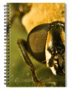 Syrphid Eyes Spiral Notebook