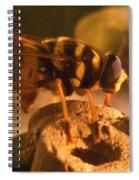 Syrphid Fly On Fossil Crinoid Spiral Notebook