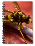 Syrphid Fly Poised Spiral Notebook