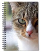 Tabby Cat Portrait Spiral Notebook